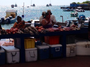 The fish market in Puerto Ayora
